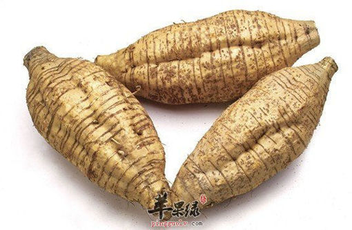 Picture of ARROW ROOT 粉葛