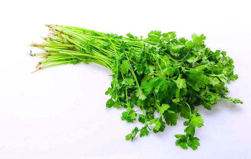 Picture of CILANTRO (A bundle) 香菜